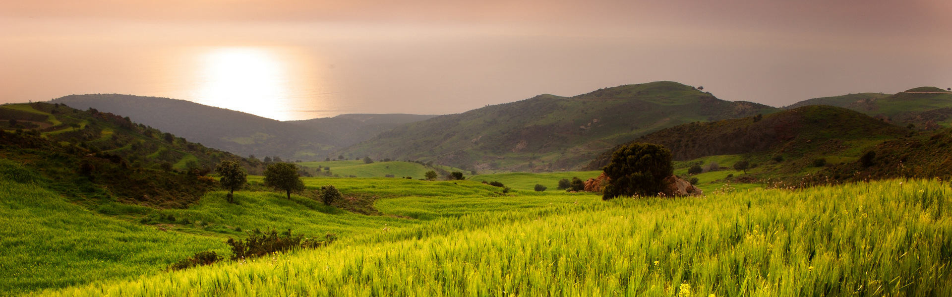 Field_in_the_sunset_2_Pafos_lrg-002